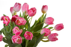 Spring Tulips bouquet Stock Images
