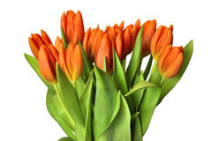 Spring tulips bouquet Stock Photo