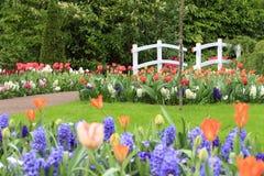 Spring tulips bridge stock image