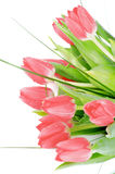Spring Tulips Stock Images