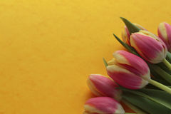Spring tulips. Bunch of tulips on yellow background; high angle view Royalty Free Stock Photo