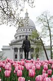 Spring Tulips at the Capitol stock photography