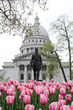Spring Tulips at the Capitol. Blooming tulips in front of the Wisconsin State Capitol Royalty Free Stock Images