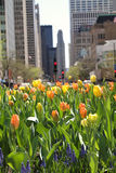 Spring tulips in the city Stock Photos