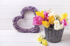 Spring tulips  and daffodils flowers in grey bucket  and decorat Stock Image