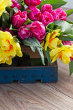 Spring tulips and daffodils  in wooden crate Royalty Free Stock Photo