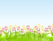 Spring Tulips Flower Border Background. A background or border featuring yellow and pink spring tulips Royalty Free Stock Images