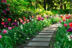 Spring Tulips Flowerbeds royalty free stock photos