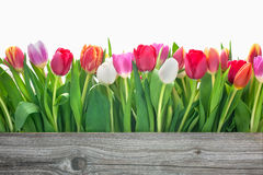 Spring tulips flowers. With copy space for your message Stock Photo