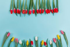 Spring tulips frame on background, top view. stock image