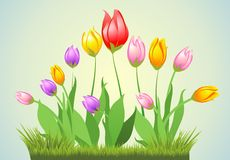 Spring tulips and grass Stock Photo