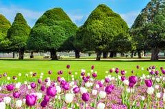 Spring tulips in Hampton court garden, London, UK stock photography