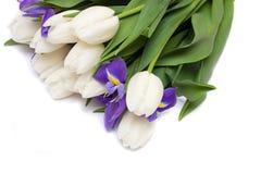 Spring tulips and iris flowers. Stock Photo