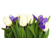 Spring tulips and iris flowers. Royalty Free Stock Photography