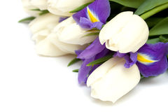 Spring tulips and iris flowers. Stock Images
