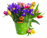Spring tulips and irises Royalty Free Stock Photo