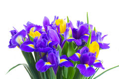 Spring tulips and irises Stock Images