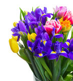 Spring tulips and irises Royalty Free Stock Images