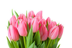 Spring tulips isolated Stock Photography