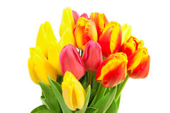 Spring tulips isolated Stock Photos