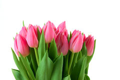 Spring tulips isolated Stock Photo