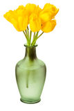Spring Tulips Isolated Royalty Free Stock Photography