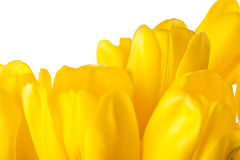 Spring Tulips Isolated Royalty Free Stock Photos