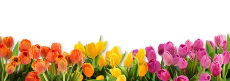 Tulip flowers bunched together in a row royalty free stock photography