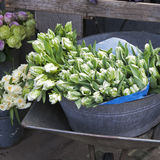 Spring tulips in a metal basket. white tulips in a basket Stock Image