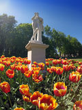 Spring tulips in park. Gatchina. Russia. Royalty Free Stock Photos