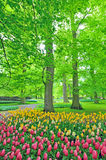 Spring tulips in park Stock Photography