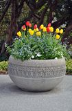 Spring Tulips Planter Stock Images