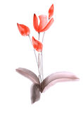 Spring tulips with red flowers on a white background. Isolated. Watercolor royalty free stock images