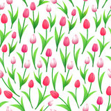 Spring tulips seamless pattern Royalty Free Stock Photos