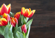 Spring tulips. Shallow depth of field Stock Photography