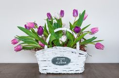 Spring Tulips in a White Wicker Basket. Royalty Free Stock Image
