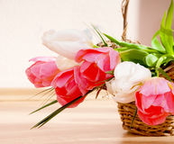 Spring tulips in a wicker basket. Royalty Free Stock Image