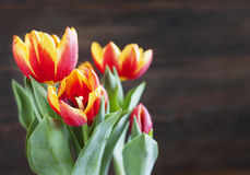 Spring tulips. Stock Photo