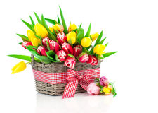 Spring tulips in wooden basket Royalty Free Stock Image
