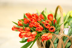 Spring tulips in wooden basket Royalty Free Stock Photography
