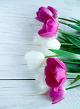 Spring tulpes flowers on white wooden background Stock Photography