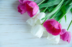 Spring tulpes flowers on white wooden background Royalty Free Stock Photos
