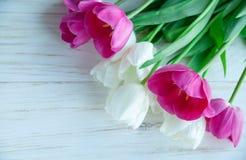 Spring tulpes flowers on white wooden background. Spring tulpes flowers on white wooden Royalty Free Stock Photos