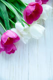 Spring tulpes flowers on white wooden background. Spring tulpes flowers on white wooden Stock Photography