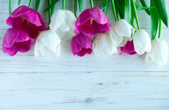 Spring tulpes flowers on white wooden background Stock Images