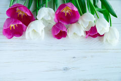 Spring tulpes flowers on white wooden background. Spring tulpes flowers on white wooden Royalty Free Stock Image