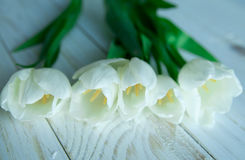 Spring tulpes flowers on white wooden background Royalty Free Stock Image