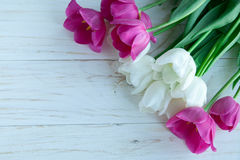 Spring tulpes flowers on white wooden background Stock Photos