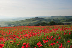 Spring in Tuscany, Italy. A field of poppies make a lovely foreground to a view of the Belvedere, across the Val d'Orcia Stock Photography