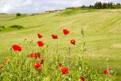 Spring in Tuscany Stock Image